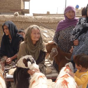 Una capra per le donne afghane - Insieme si può