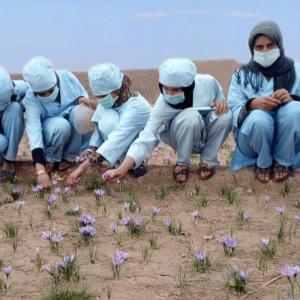 Un campo di zafferano per le donne afghane - Insieme si può