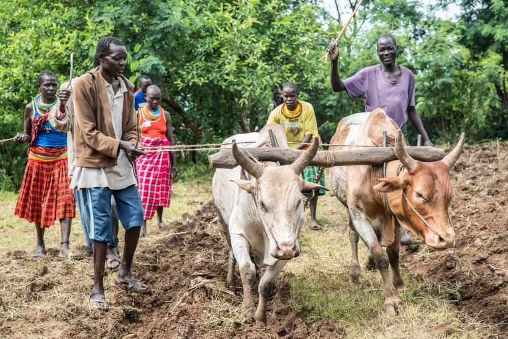 Attività agricole in Karamoja