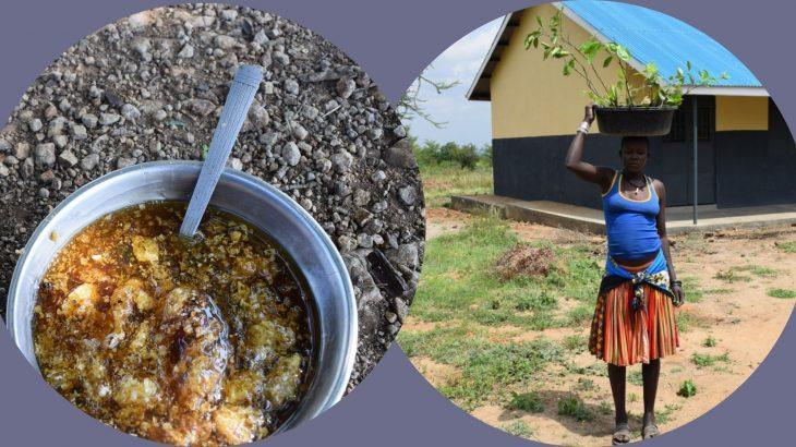 Apicoltura ed Agricoltura sostenibile
